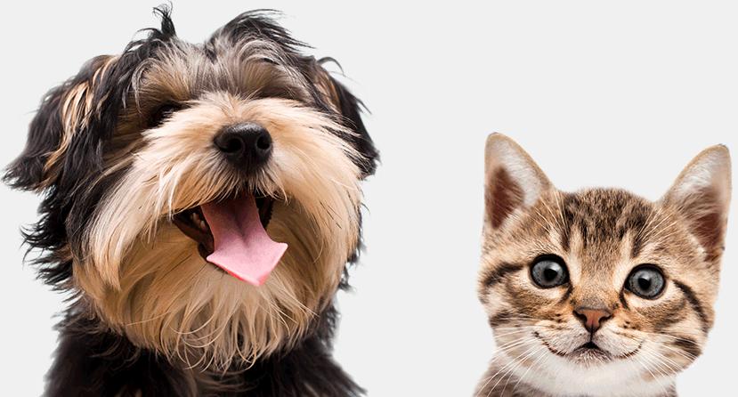 PETS Trailer Deutsch German 2016